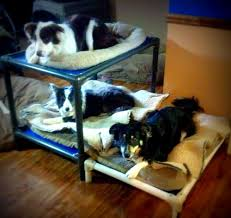 Dog Bunk Beds Furniture by Standard Dog Bunk Bed Kuranda Dog Beds