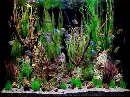 cool fish tank ornaments images