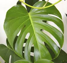 The Best Indoor Plants Types Of Indoor Plants For Low Light Do Search For Indoor Plants