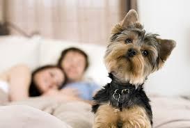 Pet Pet Friendly Hotel Tecla Roma