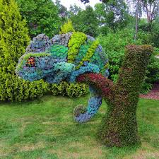 Montreal Botanical Gardens Succulents Grown Into The Shape Of A Chameleon Montreal Botanical