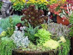 Dish Garden Ideas Succulent Dish Garden Ideas Home Outdoor Decoration Ideas With
