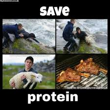 Protein Memes - save the protein gym memes a massive collection of gym memes