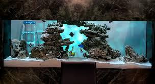 cuisine city aquarium custom aquariums aquarium design creating