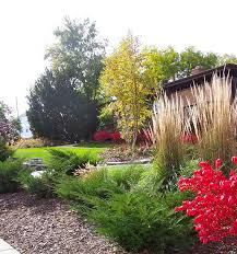 feather reed grass juniper river birch tree compact burning