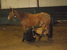 Equine Body Work 3 Simple Stretches To Keep Your Horse Loose