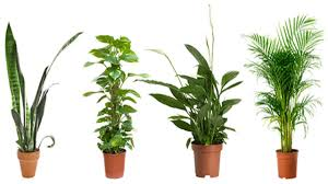 top 10 popular indoor houseplants that purify air youtube