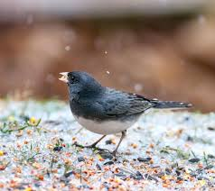 how to keep birds away from patio winterize your yard for birds audubon