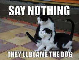 Dog Cat Meme - 17 say nothing they ll blame the dog cat meme pmslweb