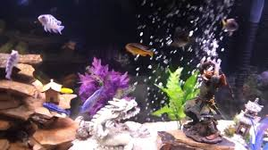 Asian Themed Fish Tank Decorations Oriental Asian Theamed Aquarium Fish Tank 55 Gal Youtube