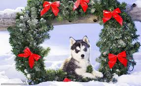 husky pup wallpapers hd android apps on google play
