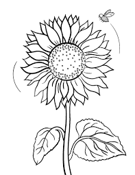 Free Sunflower Coloring Page Sunflower Coloring Page