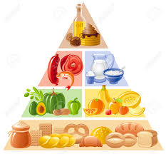 vector illustration of food guide pyramid infographics with four