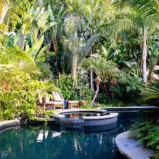 native hawaiian plants for sale tropical plants retreat sunset com