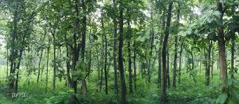 forest backdrop forest backdrop by r3dcarra on deviantart