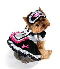Small Dog Costumes Halloween Dog Costumes Halloween Costumes Dogs Big Dogs Small Dogs