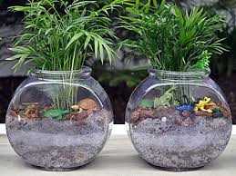 kids craft making terrariums with betta fish bowls we know stuff
