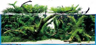 Amano Aquascaping The Japanese Aquascaping Ada And Amano Maquascaping