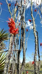 native new mexico plants best 25 cactus mexico ideas on pinterest