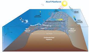 Map Of Coral Reefs Kristen A Davis Coral Reefs