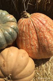 quotes about fall food ten of my favorite fall quotes dedra davis writes