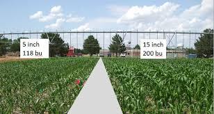 irrigated corn corn populations and deficit irrigation in western nebraska