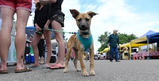 Cherry Point Farm Market by Why You Can U0027t Bring Your Dog To Many Outdoor Events In Colorado