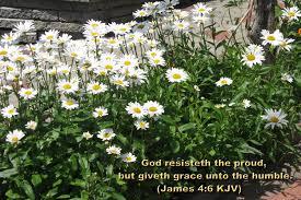 thanksgiving bible verses kjv kjv bible verse scripture u003eread one man u0027s amazing salvation