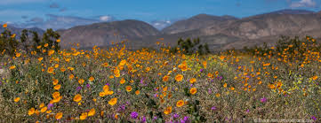 de anza expedition in anza borrego photobotanic