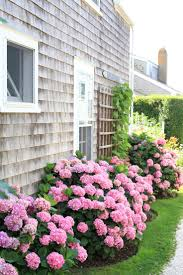 plants for the house flowers best plants for flower beds gratifying best shade plants