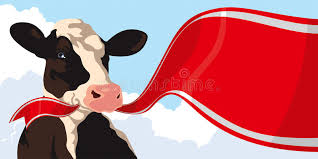 cow ribbon cow with ribbon stock photo image of horizontal 59032364