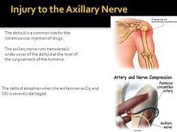 Axial Shoulder Anatomy Windsor University Of Medicine St Kitts Ppt Video Online
