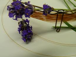 Most Fragrant Lavender Plants Lavender Lavandula Picture It