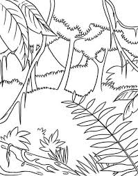 rainforest plants coloring pages 8 nice coloring pages kids
