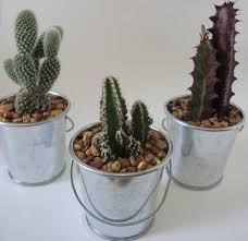 Tin Buckets For Centerpieces by Ariel U0027s Custom Order 36 Cactus U0026 Succulent Mini Buckets