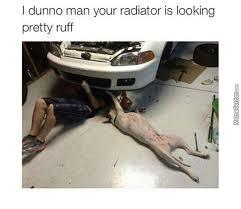 Pun Husky Meme - pun memes best collection of funny pun pictures
