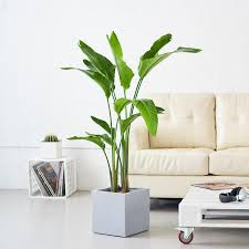 in door plant put in pot vide indoor plants nyc office and house plant delivery service in new