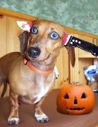 Dog Halloween Costumes 529 Doggie Halloween Fun Images Costume Ideas