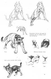 lion anatomy drawing images human anatomy learning