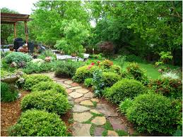 backyards gorgeous backyard shade trees backyard inspirations