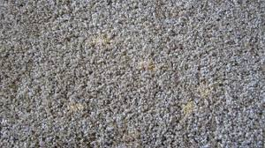 Gray Carpet by Carpet Bleach Stain Diy Carpet Dyeing Repair Youtube