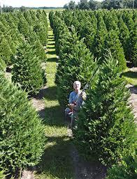 tis the season for an alabama grown christmas tree alabama