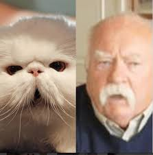 Diabetes Meme Wilford Brimley - diabetus cat 2018 funny cats