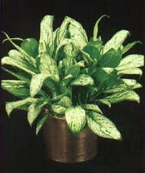 how much light do pot plants need 11 best air purifying plants images on pinterest indoor house