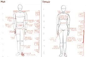 female anatomy drawing image collections human anatomy learning