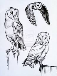 drawn owl bird pencil and in color drawn owl bird