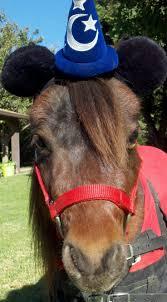 horse jockey halloween costume 69 best horse costumes mary images on pinterest horse costumes