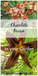 gardening tips 1294 best garden tips u0026 tricks images on pinterest garden tips
