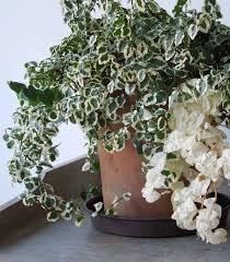 Indoor Plants That Don T Need Sun Best 25 Low Light Plants Ideas On Pinterest Indoor Plants Low