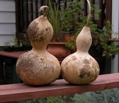 ornamental gourds farmer